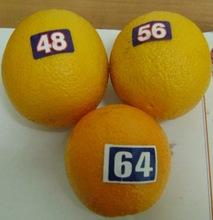 Fresh Oranges/naranjas/Orangen/apelsiner/appelsiner