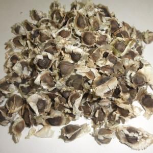 Sale Of Moringa (Drumstick) Seeds - PKM 1
