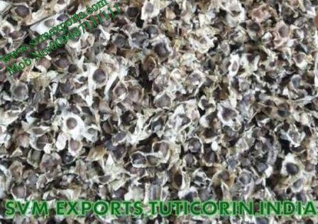 Higenic Moringa PKM1 Seed Exporters India
